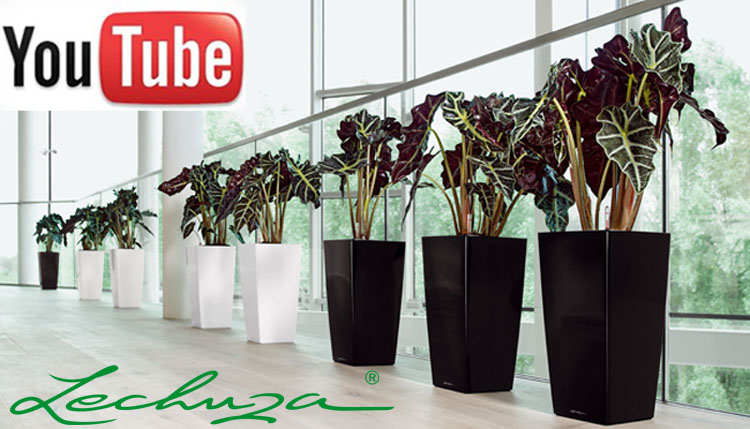 You tube Lechuza