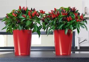 Idee per arredare casa - Luce per piante in casa ...