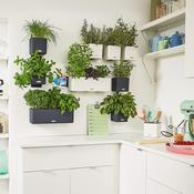 Supporto Magnetico Green Wall (per Cube 14)