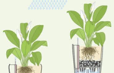 Utilizzo vasi lechuza